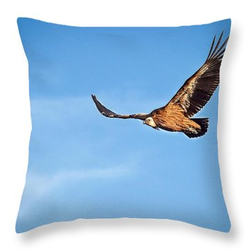 Griffon Vulture Throw Pillow by Meir Ezrachi