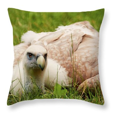 Throw Pillow featuring the photograph Griffon Vulture by Nick Biemans