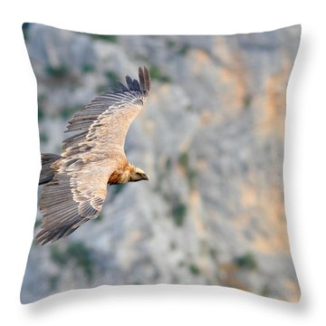 Griffon Vulture Throw Pillow by Richard Patmore