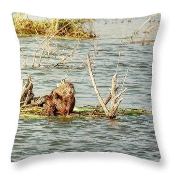 Grinning Nutria On Reeds Throw Pillow by Robert Frederick