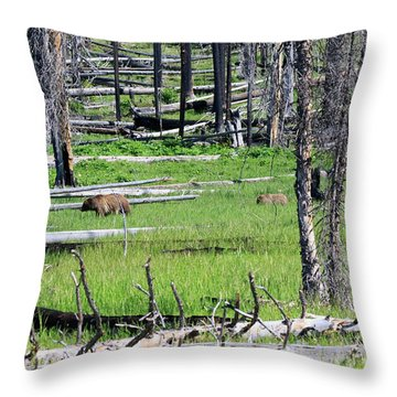 Grizzly Bear And Cub Cross An Area Of Regenerating Forest Fire Throw Pillow by Louise Heusinkveld