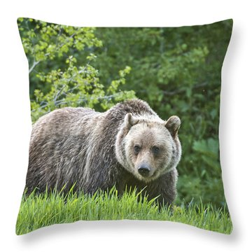 Grizzly Bear Throw Pillow by Gary Lengyel