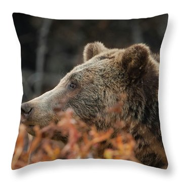 Grizzly Bear Portrait In Fall Throw Pillow