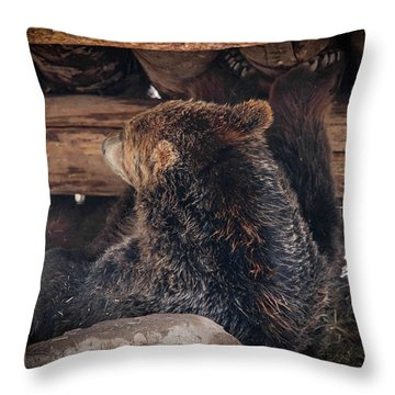 Grizzly Bear Under The Cabin Throw Pillow by Dan Pearce
