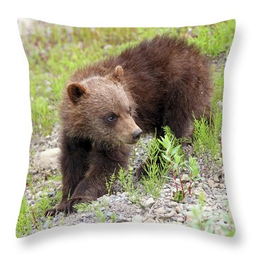 Grizzly Cub II Throw Pillow
