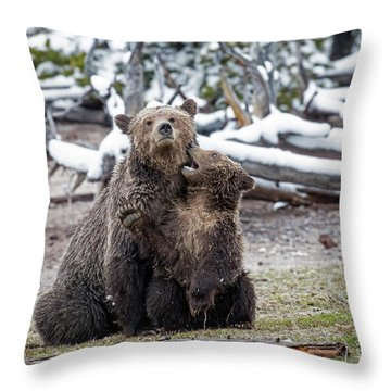 Throw Pillow featuring the photograph Grizzly Cub Playing With Mother by Scott Read