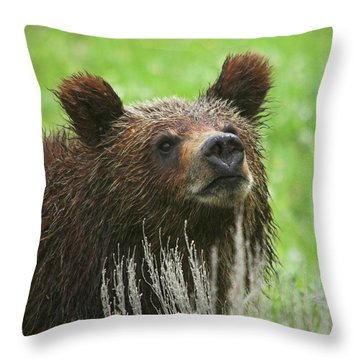 Throw Pillow featuring the photograph Grizzly Cub by Steve Stuller