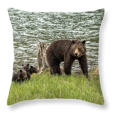 Grizzly Mom And Cubs Throw Pillow by Yeates Photography