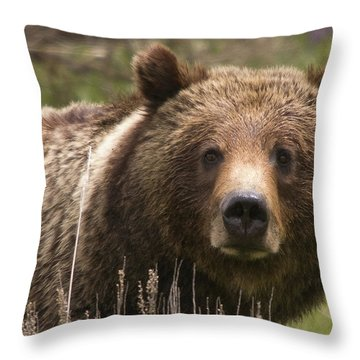 Grizzly Portrait Throw Pillow by Steve Stuller