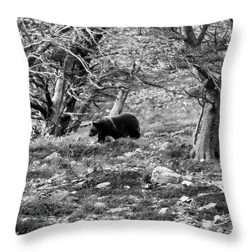Omnivore Throw Pillows