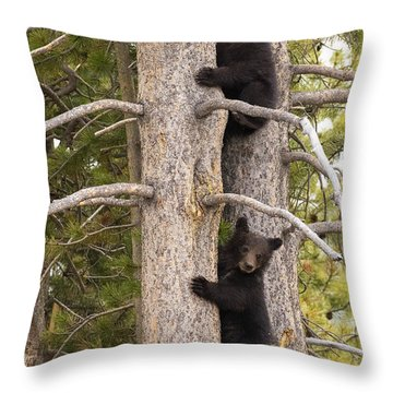 Throw Pillow featuring the photograph Grizzlys Don't Climb Trees by Aaron Whittemore