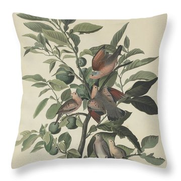 Ground Dove Throw Pillow by Anton Oreshkin