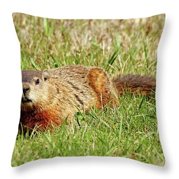 Groundhog In The Grass Throw Pillow