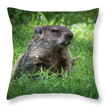 Groundhog Posing  Throw Pillow