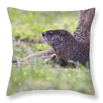 Groundhog Throw Pillows