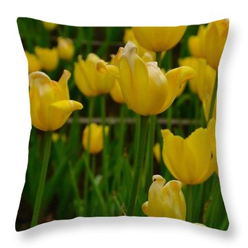 Grouping Of Yellow Tulips Throw Pillow