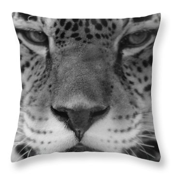 Grumpy Tiger  Throw Pillow
