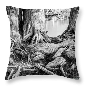 Guadalupe Bald Cypress In Black And White Throw Pillow