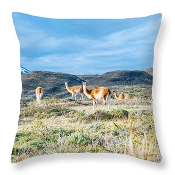 Guanaco In Patagonia Throw Pillow