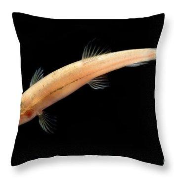 Guanan Groundwater Loach Throw Pillow
