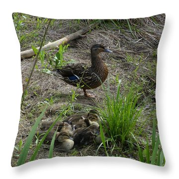Guarding The Ducklings Throw Pillow by Donald C Morgan
