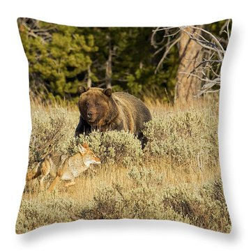 Guarding The Prize Throw Pillow by Aaron Whittemore