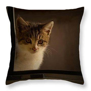 Guest On The Window Throw Pillow