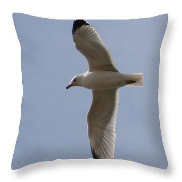 Throw Pillow featuring the photograph Gull 1 by David Dunham