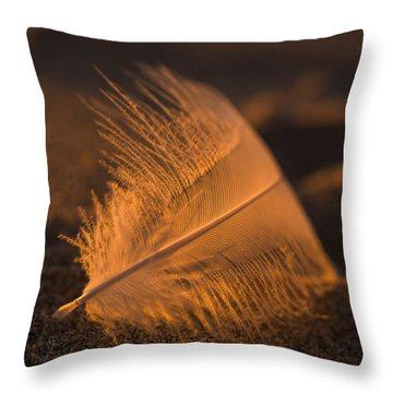 Gull Feather At Sunset Throw Pillow