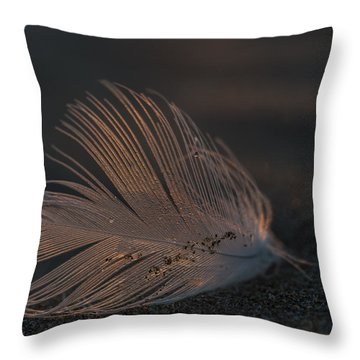 Gull Feather On A Beach Throw Pillow