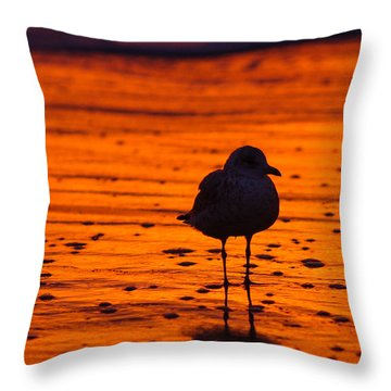 Gull Caught At Sunrise Throw Pillow by Allan Levin