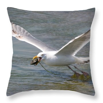 Gull With A Clam Throw Pillow by Dan Williams