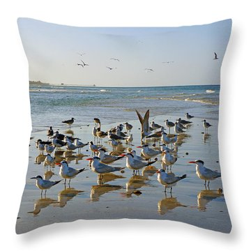 Gulls And Terns On The Sanbar At Lowdermilk Park Beach Throw Pillow