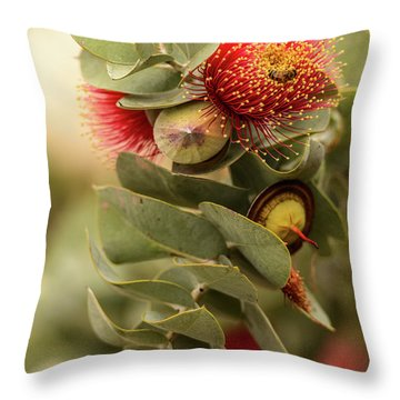 Gum Nuts Throw Pillow