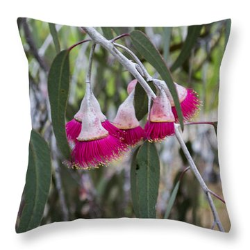 Throw Pillow featuring the photograph Gumnut Flowers by Angela DeFrias