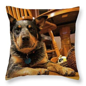Throw Pillow featuring the photograph Gunner The Blue Heeler by Cricket Hackmann