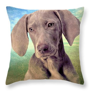 Gunshy Weimaraner Looking For Loving Home Throw Pillow