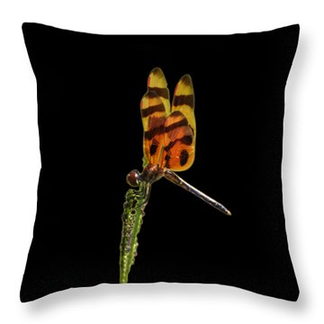 Throw Pillow featuring the photograph Halloween Pennant Dragonfly .png by Al Powell Photography USA