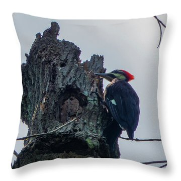 Hammering It Home Throw Pillow by Kimo Fernandez
