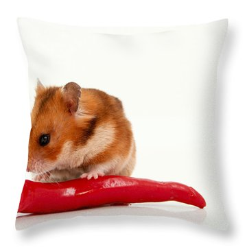 Hamster Eating A Red Hot Pepper Throw Pillow by Yedidya yos mizrachi