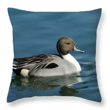 Throw Pillow featuring the photograph Handsome Drake by Fraida Gutovich