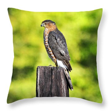 Throw Pillow featuring the photograph Handsome Hawk by Al Powell Photography USA