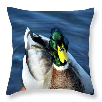 Handsome Male Mallard Throw Pillow