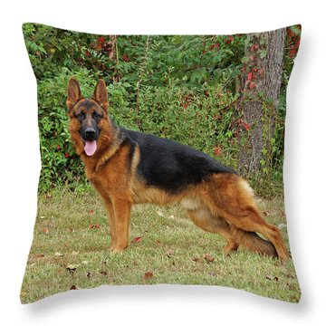 Throw Pillow featuring the photograph Handsome Rocco by Sandy Keeton