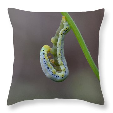 Hang, Then Reach Throw Pillow
