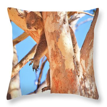 Hanging Around, Yanchep National Park Throw Pillow by Dave Catley