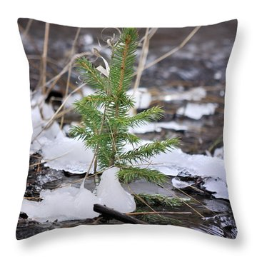 Hanging In There Throw Pillow