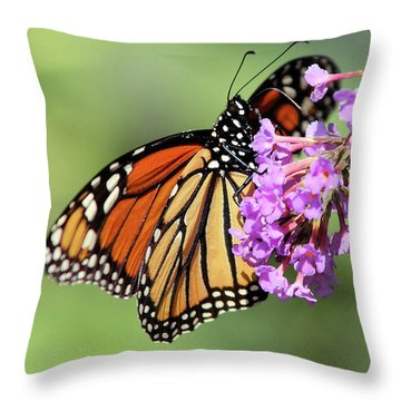 Hanging On Throw Pillow by Karol Livote