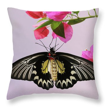 Hanging On V2 Throw Pillow