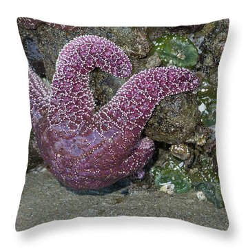 Hanging Out At The Beach Throw Pillow